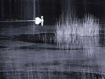 Swan lake in black-white von vogtart
