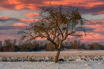 The lonely Tree by Michael Naegele