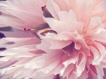Ein Hauch von rosa von vogtart