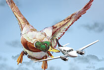 Enten-Angriff, (Version ohne Sprechblase mit dunklen Wolken)