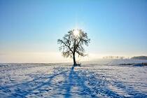 Wintertraum von Claudia Evans