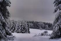 Winterwald von mario-s