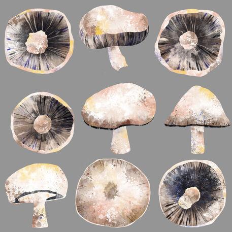Mushrooms-8000