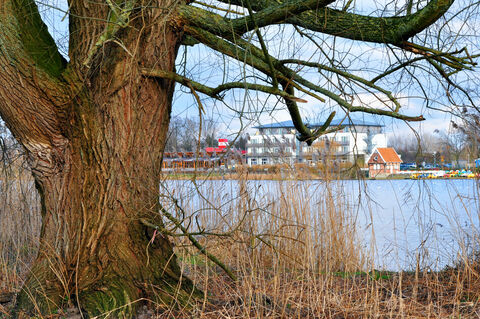 Baum-pier99-see-nordhorn-munk-heinz-kunst