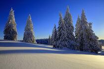 Feldberg mit Schnee von Patrick Lohmüller