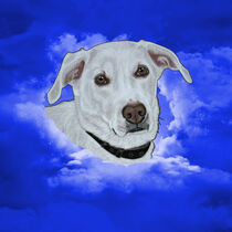 Sammy Gruss aus dem Himmel von Conny Dambach
