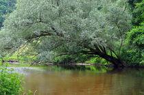 Unberührte Natur von Heinz Munk