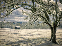 Winter Thoughts by Edmund Nagele F.R.P.S.