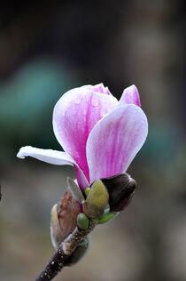 Zarte Blüte von Heinz Munk