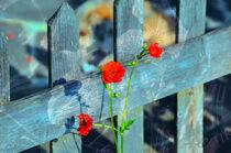 Blumen am Lattenzaun von Heinz Munk