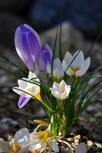 zarte Blüten by Heinz Munk