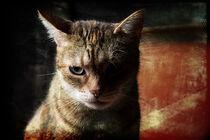Stray Cat by Petra Dreiling-Schewe