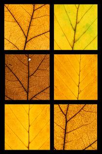 Herbstblätter von Wolfgang Cezanne
