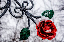Red metal rose by Michael Naegele