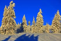 Wintermorgen auf dem Feldberg von Patrick Lohmüller