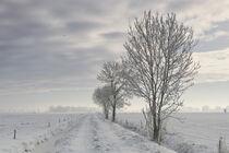 Winter von Rolf Müller