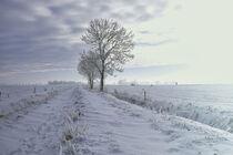 Feldweg im Winter von Rolf Müller