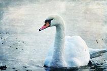 White Beauty von Randi Grace Nilsberg