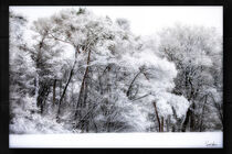 Trees in the Wintertime by Sandra  Vollmann