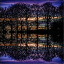 NatureLights by Sandra  Vollmann