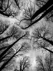 BLACK TREES von Robert H. Biedermann