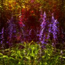 Im Innern der Blüte  von Bastian  Kienitz