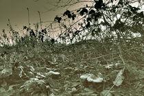 Unterholz Druid  von Bastian  Kienitz