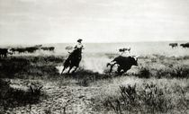 Cowboy on horseback lassooing a calf  by L.A. Huffman