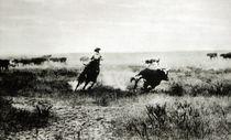 Cowboy on horseback lassooing a calf  von L.A. Huffman