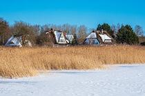 Bodden mit Häuser in Born auf dem Fischland-Darß im Winter von Rico Ködder