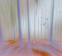 Moving Forest Light von florin