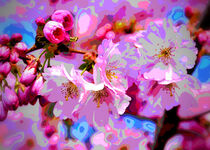 CherryBlossom Magic by mimulux