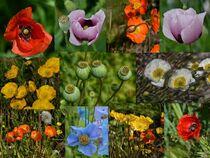 Mohnblumen Collage von Iris Heuer