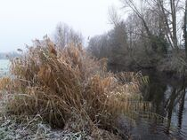 Winter Reed von Juergen Seidt