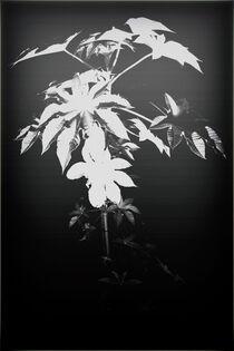 Pflanzenmysterium von Bastian  Kienitz