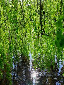 Grüne Kaskade by Ulrike Ilse Brück