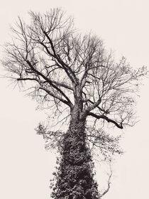 Der schwarze Baum von Ingo Menhard