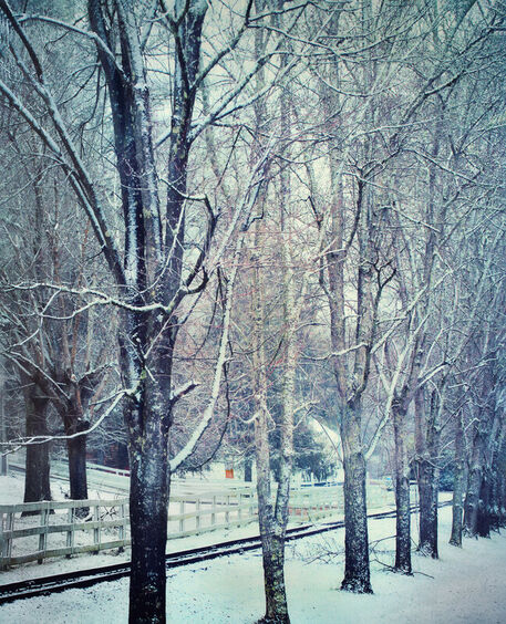 Snow-row-of-trees-50-end