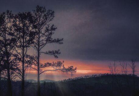 Sunrise-trees-bare-4-enlarged