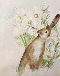 Hase im weissen Blütenmeer von Sonja Jannichsen