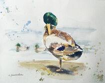 Einsamer Enterich von Sonja Jannichsen