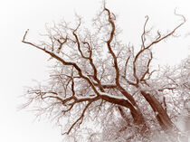'Big old tree covered with snow' von Hajarimanitra Rambeloarivony