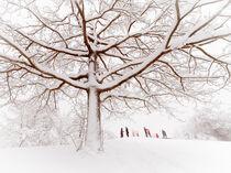 Tree and winter time by Hajarimanitra Rambeloarivony
