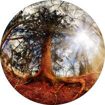 Mother nature by Hajarimanitra Rambeloarivony