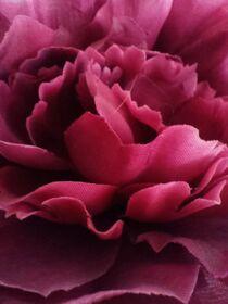 Roses for Spring von Martina Ute Rudolf