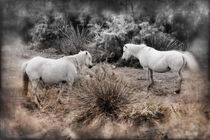 Pferde in der Wildnis von Gabi Kaula
