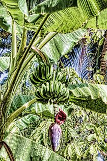 Bananenpflanze von Gabi Kaula
