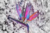 Die Blume von Gabi Kaula