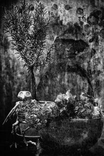 Still mit Skelett an Rosmarin by Petra Dreiling-Schewe