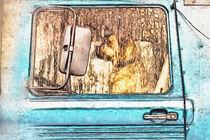 Hundetag von Gabi Kaula